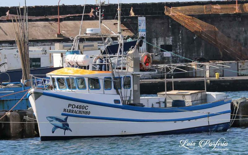 Marrachinho | Pesca costeira